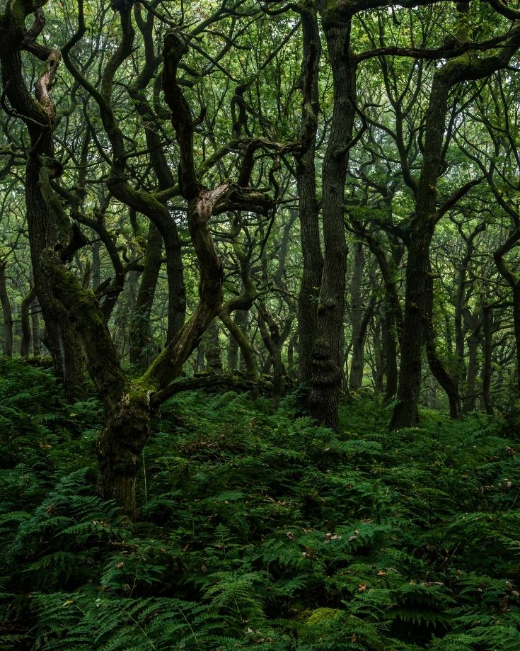 Enchanted looking forest at Padley Gorge